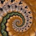 Spirale 25