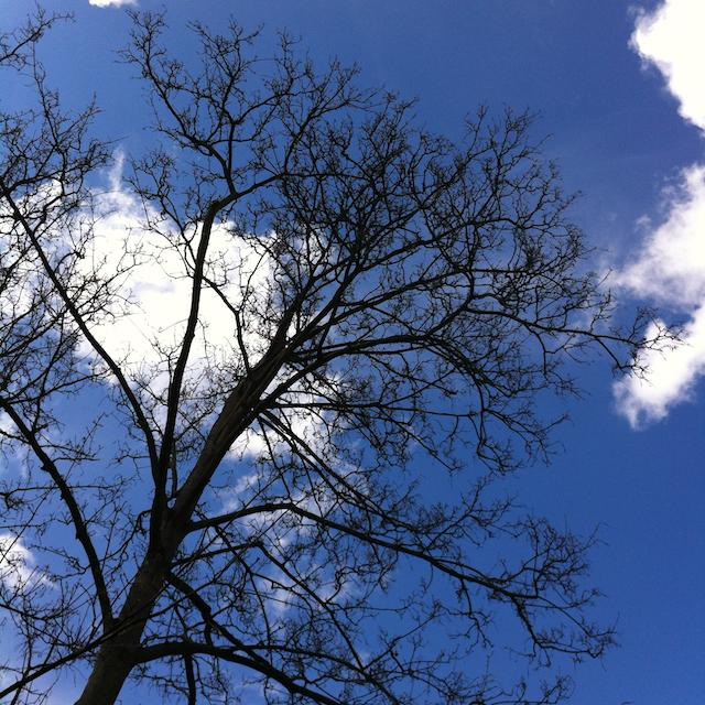Botanischer Baum
